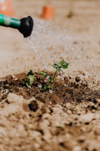 photo of small plant on brown soil